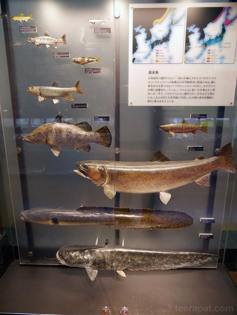 Japan14_769