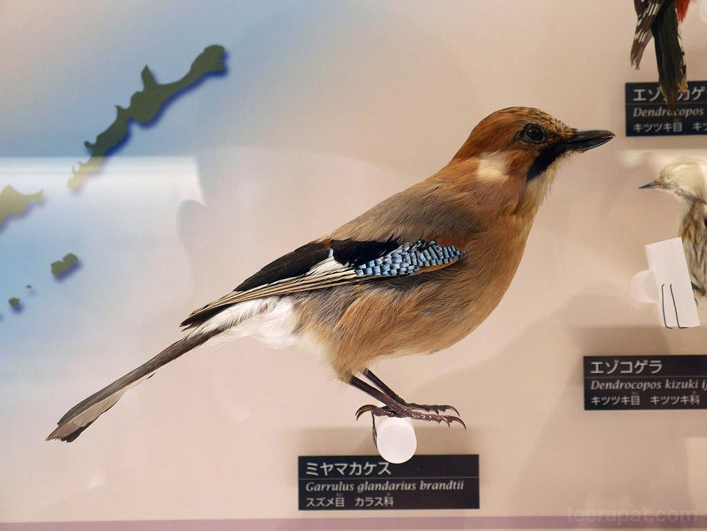 Japan14_761